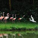 湿地水鸟精彩表演