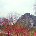七星岩和鼎湖山暖意在枝头 作者:@deuter
