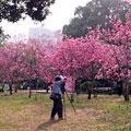 广州烈士陵园偶遇一片醉人的玉堂春 作者:@kk小姐儿