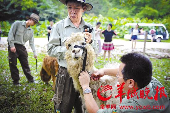 动物园的动物难耐酷暑