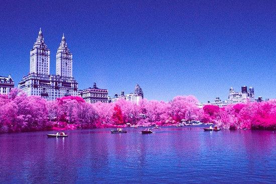 纽约中央公园