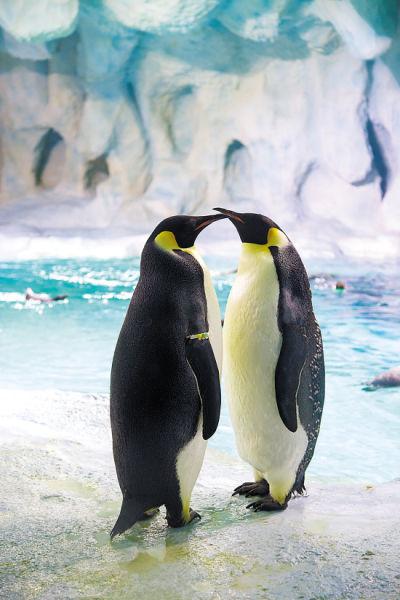 壁纸 动物 企鹅 400_600 竖版 竖屏 手机