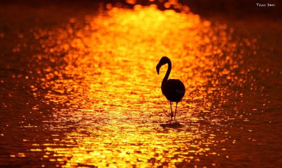 绝美的野生动物摄影_新浪中山