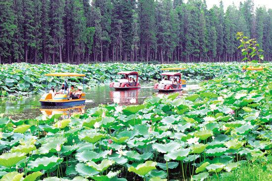 叶静、曾令华 摄影报道   本报讯 正是荷花盛开的季节,日前,培植了荷花面积800多亩、品种400多种的三水荷花世界迎来了上万名赏荷游客,其中有不少游客划舟荷塘,在水上赏荷花。园区投资上百万元建设的荷塘水道正式全面贯通,游客可以乘船游览整个园区。这个新项目的推出不但给游客提供了新的体验,而且再现了岭南水乡美景。   夏日炎炎,百花已经变成绿叶,只有荷花在这个季节里独领风骚,成为一塘独秀。上周日,培植荷花的面积800多亩、品种500多种的三水荷花世界世界迎来上万名赏花游客。在荷花盛开的荷塘小径,随处可以