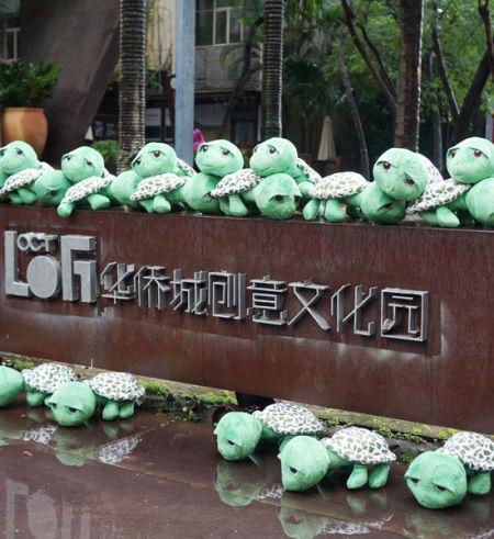 5000只海龟军团惊现深圳 倡导生态环保