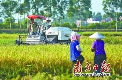 水稻儿童手工制作