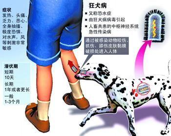 伪狂犬疫苗免疫程序