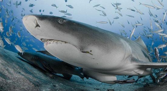 超轻粘土微笑鲨鱼制作步骤