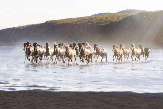 冰岛女摄影师镜头下的独特视角:骏马奔腾