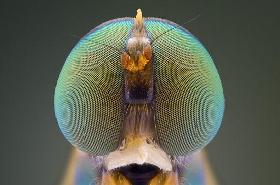其微距摄影作品以独特的视角展现了小昆虫们或美丽