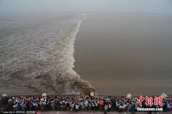 当大潮恰逢中秋节:壮观钱塘大潮之一线潮