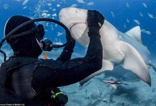 大胆潜水员徒手喂食虎鲨呼吁保护动物