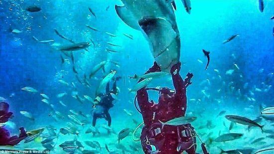 壁纸 海底 海底世界 海洋馆 水族馆 桌面 550_309