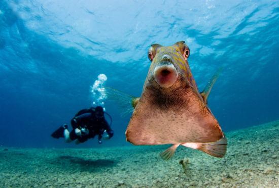 红海小鱼镜头前撅嘴卖萌可爱十足毫不露怯
