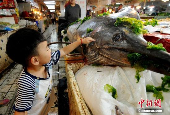 青岛渔民捕获巨型箭鱼王:3米长412斤重