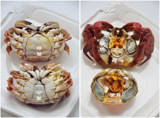 螃蟹,不可不知的:   1.中秋重阳时节母螃最肥,分辨螃蟹的公母是看脐部,圆脐的母螃蟹,尖脐的是公螃蟹。   2.螃蟹的四不吃,据说藏有细菌毒素啥的,最好剔除,具体位置模样见下图。   蟹腮,打开蟹壳就可以看到的,分布在两侧的软毛,是蟹的呼吸器官,全部揪掉即可。   蟹心,小小软软的白色薄片,据说是蟹中最寒的地方。   蟹胃,形如三角形的骨质小包,也叫蟹泡,内有污沙。   蟹肠,掰开蟹脐的时候,底部带有黑色线状就是了。   3.