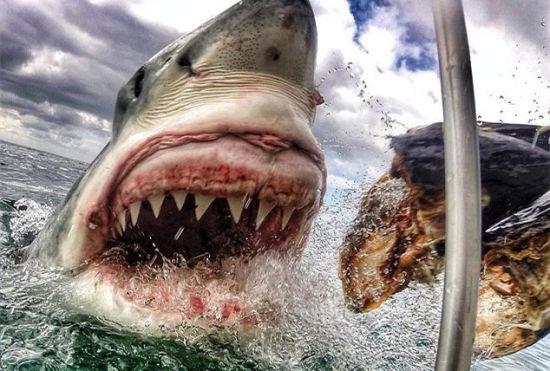 女教师近距离拍摄大白鲨照片引网友围观