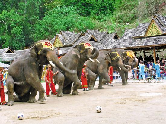 西双版纳热带雨林景区大象表演