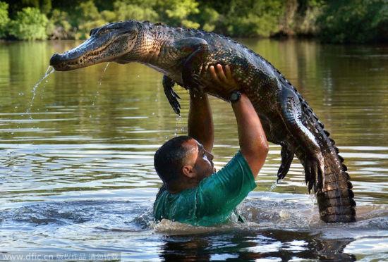 实拍导游拽起短吻鳄举过头顶的惊险场面