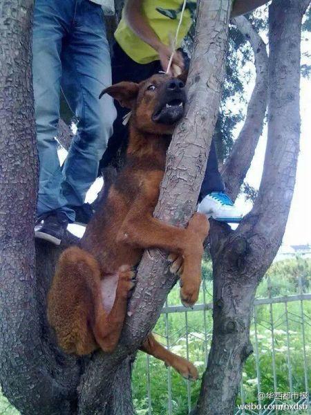 男子将狗吊树上虐杀 挑衅网友谁也不能管