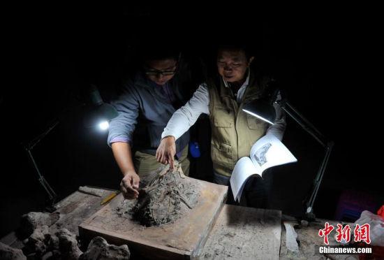 云南发现亚洲首具腔骨龙类新属种化石