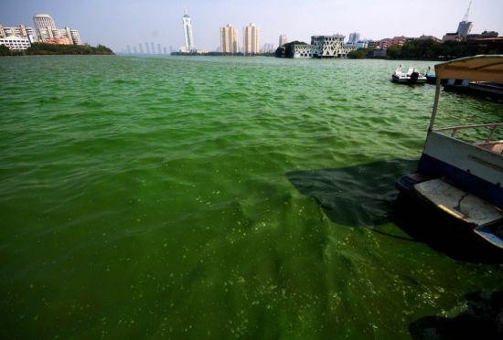 南昌青山湖遭蓝藻侵袭百亩湖面如泼绿漆