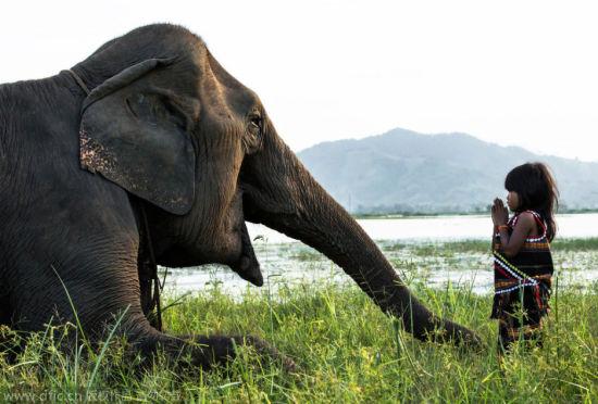 越南小女孩与她的超级宠物:大象