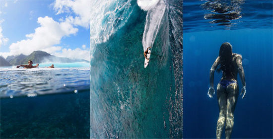 大自然水的动物图片