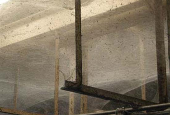 美国污水处理厂遭蜘蛛入侵数量逾1亿只