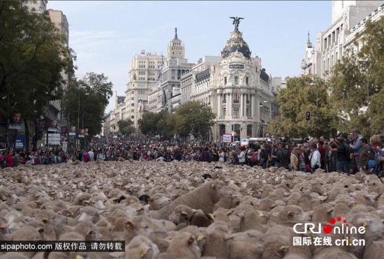 西班牙羊群超级大游行2000只羊过市中心