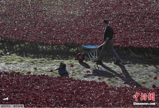 英国志愿者移除伦敦塔前陶瓷罂粟花海