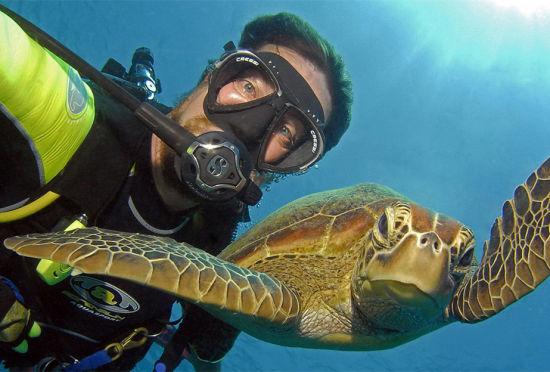 澳男子潜水与海龟鲸鲨等海底动物自拍走红