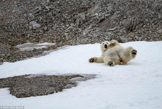 镜头下的壮美北极风光冰山陡峭动物卖萌