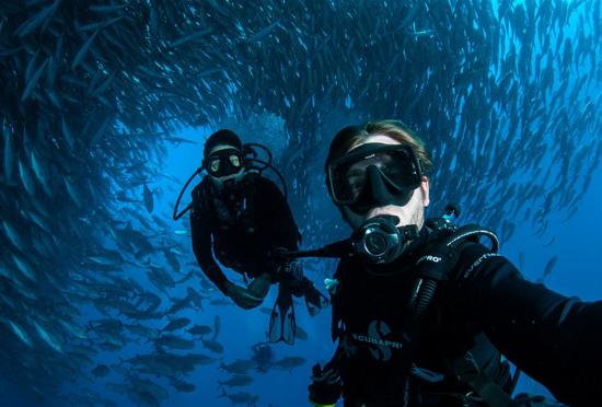 澳夫妇潜水遇鱼群镜头记录震撼景象