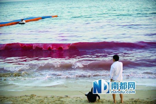 据市海洋环境与资源监测中心监测属夜光藻赤潮,赤潮带海水呈红色,有