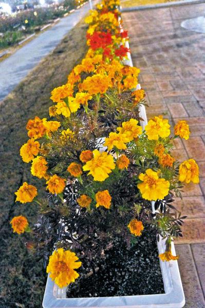 欧式仿真玫瑰插花图片