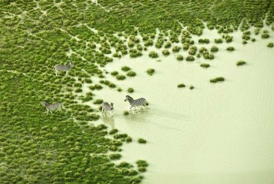 宁静悠远抽象画航空野生动物摄影