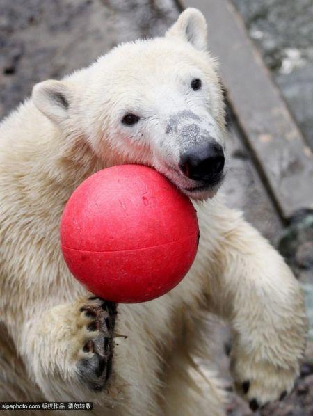 武汉图说蝴蝶当地花园2014年11月,清远,布尔诺动物园内的北极熊捷克时间会馆v图说正文图片