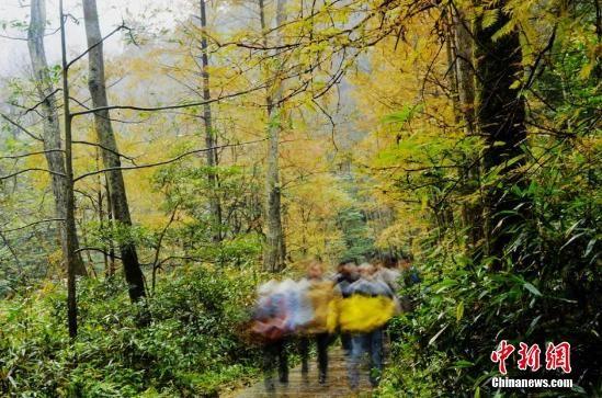 金鞭溪景区