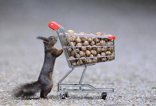 摄影师拍摄创意图集展现松鼠们的圣诞节