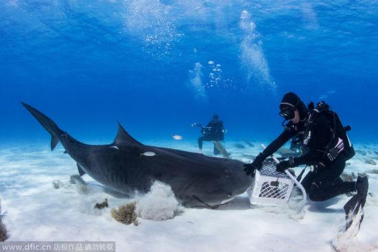壁纸 海底 海底世界 海洋馆 水族馆 550_367