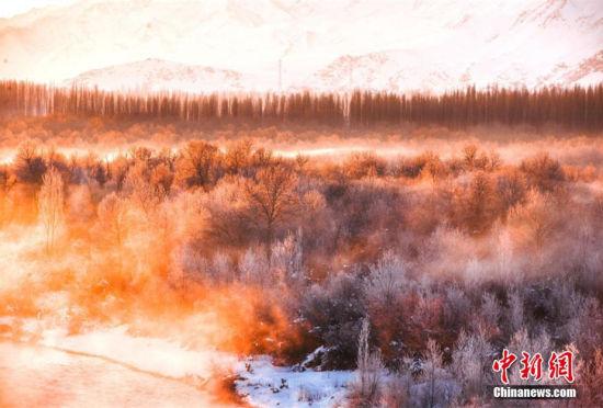 新疆尼勒克万顷次生林被雾气笼罩恍如仙境