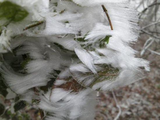 """叶子上的霜 这种构型被称为""""薄片"""""""