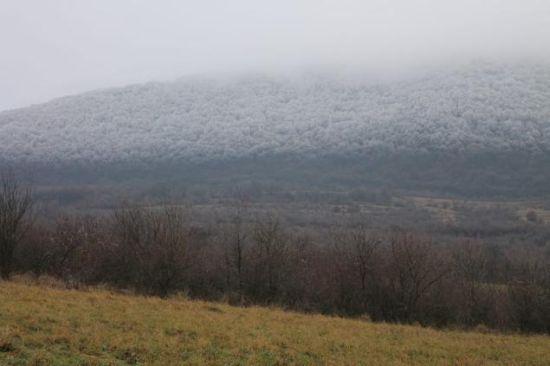 冰雪森林 远景图