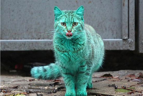 """保加利亚小猫常年睡油漆桶成""""绿宝石猫"""""""