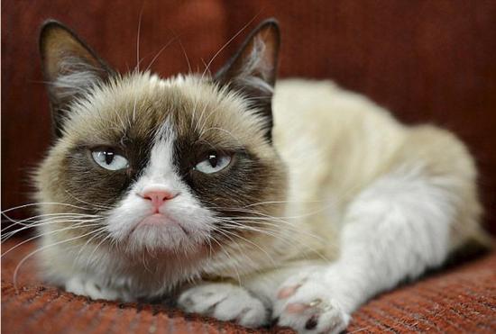 不爽猫走红网络两年为主人赚得640万英镑