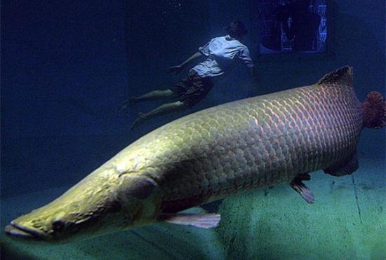 盘点全球九大能吓死人的濒危巨型鱼类
