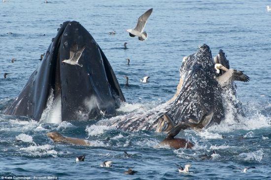 鲸鱼的身体结构
