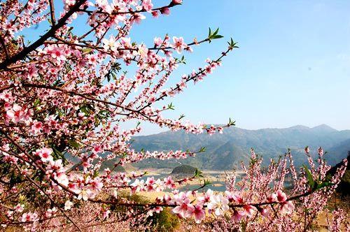 桃花折纸步骤图解视频