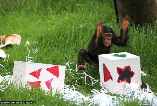 澳大利亚:圣诞气氛中的塔朗加动物园